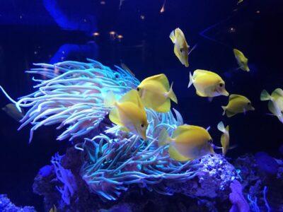 オレゴンコースト水族館