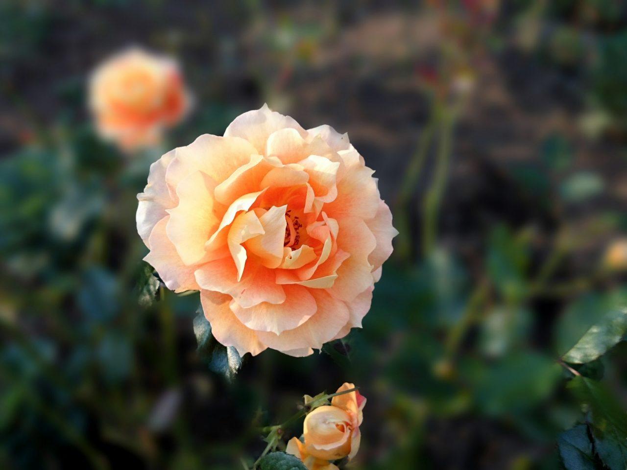 戸山公園の花壇_3