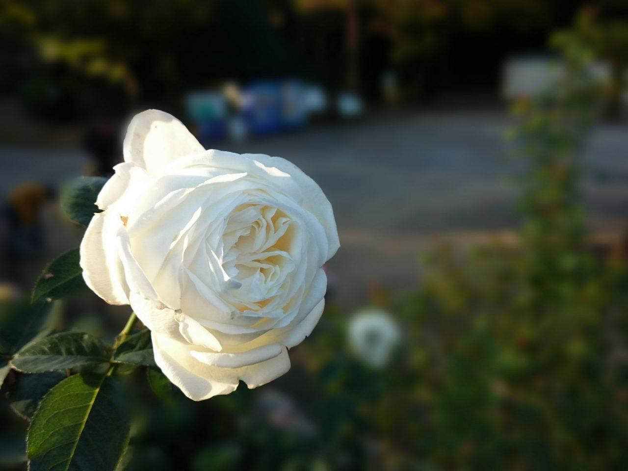 戸山公園の花壇_4