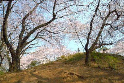 新宿戸山公園の桜-13.36.57-i