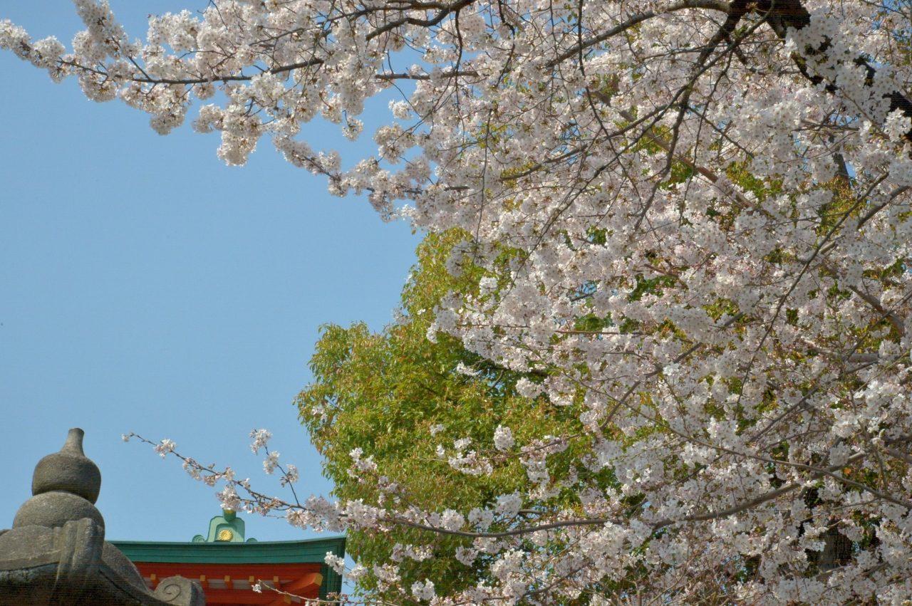 新宿一陽来福〜放生寺(穴八幡の別当寺)の桜