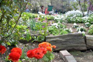 戸山公園の花壇-i