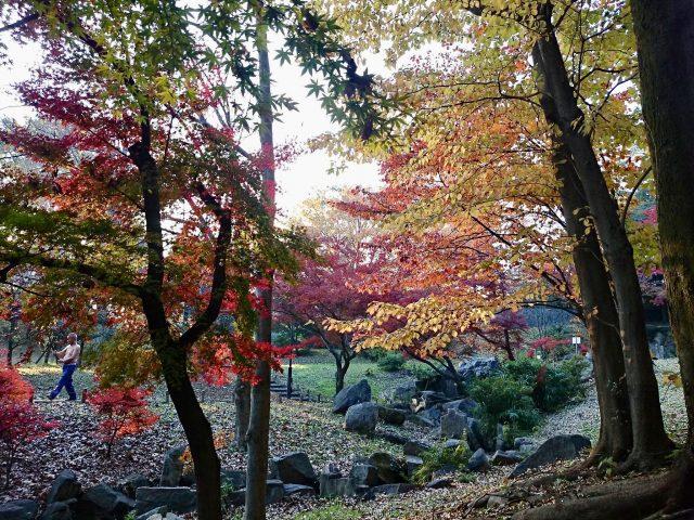 戸山公園の紅葉-2
