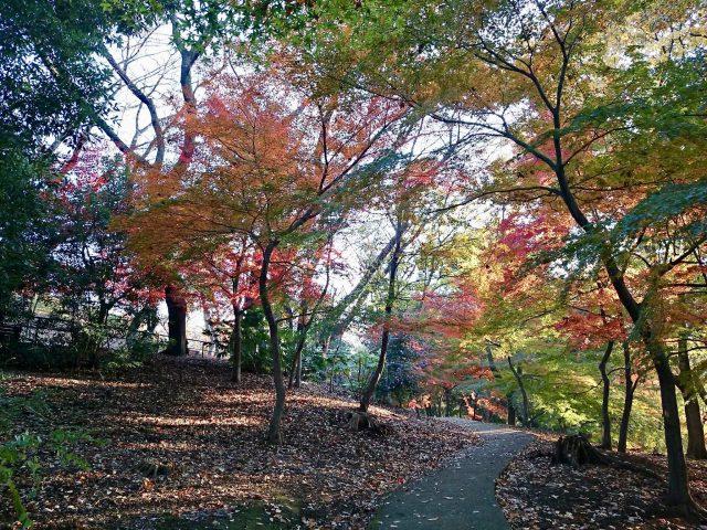 戸山公園の紅葉-1