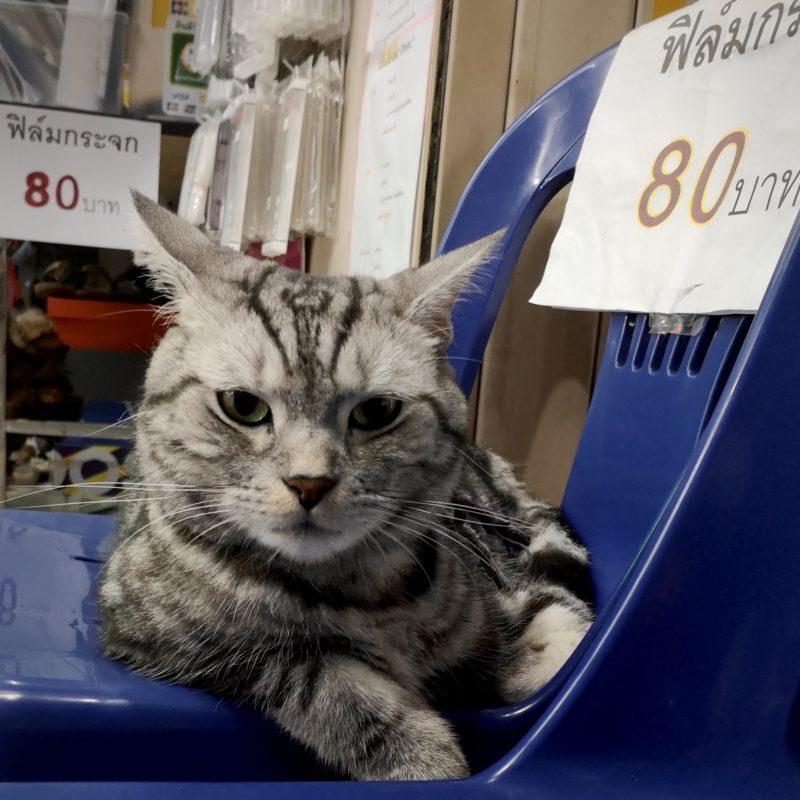 スマホショップの看板猫-1