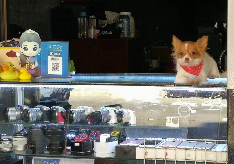 店番する犬-1