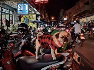バイクの見張り番犬