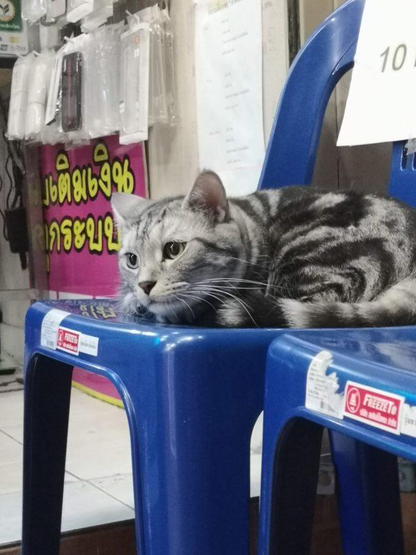猫の現画像