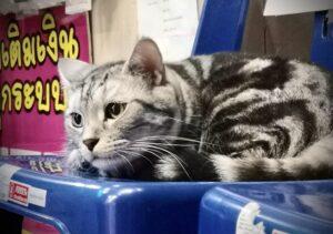 iPad写真アプリで編集した猫
