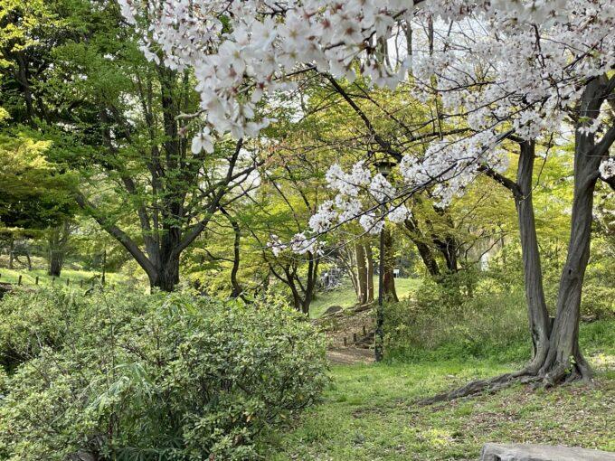 戸山公園の散歩道