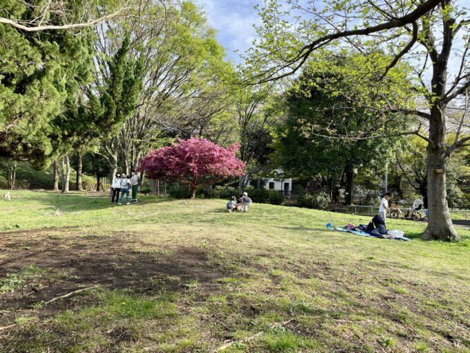 戸山公園の広場
